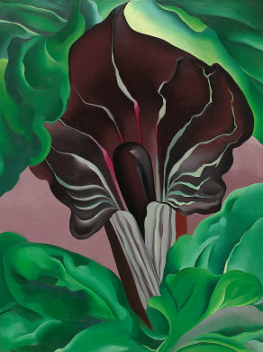 Image of Georgia O'Keeffe, Jack-in-Pulpit—No. 2, 1930